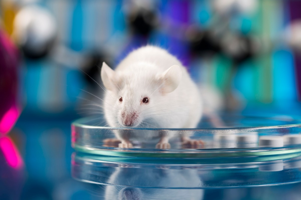 CRISPR Used To Remove Fearful Memories From Rats